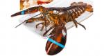 预售:獐子岛 鲜活波士顿大龙虾 450g/只 不活包退
