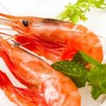 獐子岛 俄罗斯甜虾刺身1kg