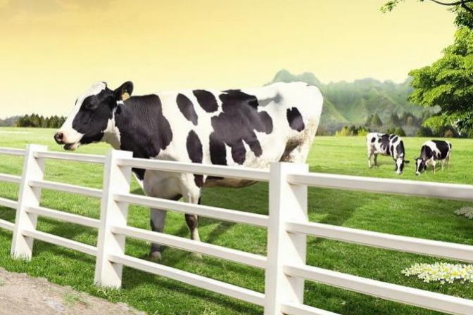 10大进口牛奶品牌推荐
