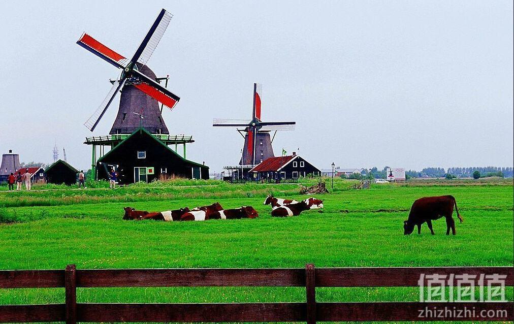 德国爱他美与荷兰牛栏区别