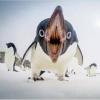 "QQ企鹅的原型,其实才是鹅界""最毁三观""的存在我怕描写得过于生动,会破坏大家的印象"