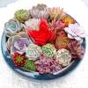 CHUN FANG  多肉植物组合盆栽(10棵多肉+10个盆+1600ml营养土)¥14