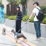 hipidog 嬉皮狗 中小型犬背心式牵引绳 3色