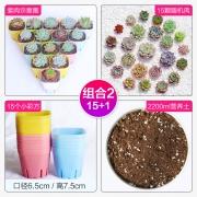 CHUN FANG 多肉植物组合盆栽(15棵多肉+15个盆+2200ml营养土)