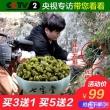 央视专访品牌, 七宝堂 霍山铁皮石斛枫斗10g7.9元包邮(需用优惠券)