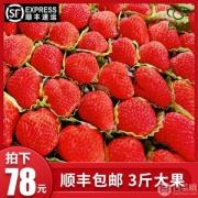 伊人之佳 新鲜现摘红颜奶油草莓 3斤