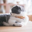 Touchdog 它它 猫咪脖圈 20-33cm 多款可选 9元(需用券)¥9