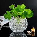 宝兰晶 玻璃水培花瓶 7.5*10cm 不含植物 6.9元包邮(需用券)¥7