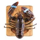 WECOOK 味库 波士顿大龙虾 1只 500-400g/只*2件 + 花蛤1斤 148.5元包邮(下单立减)¥149