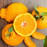 XIANGUOLAN鲜菓篮青见柑橘丑橘母本5斤装*3件