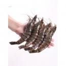 越南黑虎虾 虾长16cm 净重400g/盒 拍2件109元包邮¥118