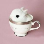 宠物活体:小型茶杯兔 1只158元包邮
