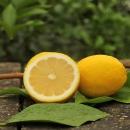 光辉红钻 安岳柠檬 黄柠檬 净果5斤 7.8元包邮(需用券)¥8