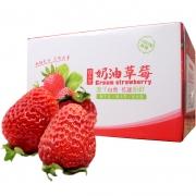 顺丰包邮 现摘新鲜草莓水果 当季应季水果牛奶油草莓5斤 69元¥79