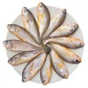 京东PLUS会员: 鲜城渔公 鲜冻东海小黄花鱼 500g *4件28元包邮(多重优惠,合7元/件)
