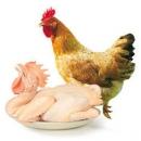 WENS 温氏 农养鸡 800g *4件100元(下单立减)