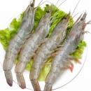 谷源道 厄瓜多尔白虾 11-12cm 1.4kg 69元包邮(双重优惠)¥69
