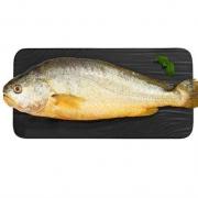 PLUS会员:唐港村 深海大黄花鱼 450-500g *3件74元包邮(多重优惠,合24.66元/件)