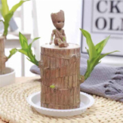 沁苑 巴西木水培植物 直径6厘米