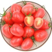 泥源坊 圣女果 小番茄 小西红柿 礼盒装约2kg29.9元