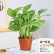 jingrunlai 景润赉 绿萝 植物盆栽4.9元包邮(需用券)