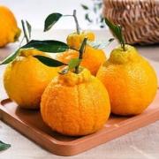 沃多鲜 丑橘不知火 带箱5斤大果16.8元包邮(需用券)