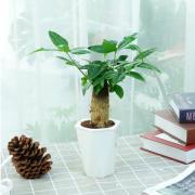 有券的上! ZHONGZHEWAN 种着玩 室内植物盆栽 发财树+菱形盆¥4.00 0.6折 比上一次爆料降低 ¥1.9