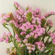 春天到家 勿忘我 干花花束 粉色 *2件19.8元包邮(折9.9元/件)