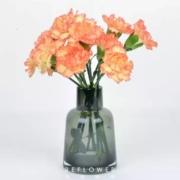 plus会员:花点时间 康乃馨鲜花 8枝  颜色随机9.9元包邮(需用券)