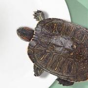 yee 龟粮 50g +小乌龟1只+通透龟盆1个5.9元包邮(配合签到红包可做到3.7元)