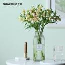 PLUS会员:FlowerPlus 花加 水仙百合 六出花 10枝5.9元包邮