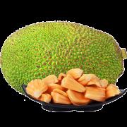 PLUS会员:陈叔 海南黄肉菠萝蜜 20-25斤