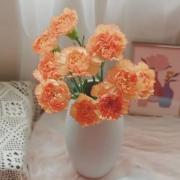 plus会员:linkinjoy 康乃馨花束 单色随机 8枝赠2枝