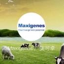 Maxigenes的奶粉怎么样?