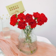 plus会员:远方的花 红色康乃馨 10枝9.9元包邮(需用券)