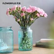 plus会员:FlowerPlus 花加 优选香石竹20枝 颜色随机