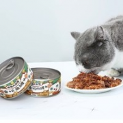 pet camp 宠物大本营 猫罐头 170g*12罐 混合口味