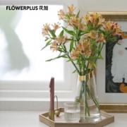 PLUS会员:FlowerPlus 花加 香槟色六出花 10枝