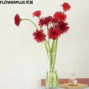PLUS会员:FlowerPlus 花加 向日葵 5枝