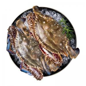 PLUS会员:首鲜道 螃蟹舟山梭子蟹 5斤 4-9两/只