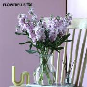PLUS会员:FlowerPlus 花加 紫罗兰 10枝