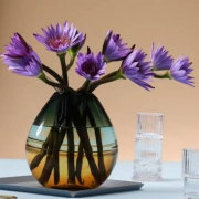 PLUS会员:FlowerPlus 紫色睡莲 10枝9.9元包邮(需用劵)