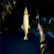 steam:Ultimate Fishing Simulator  《钓鱼模拟器》20.4元