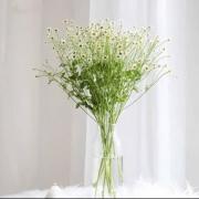 PLUS会员:FlowerPlus 花加 洋甘菊1扎